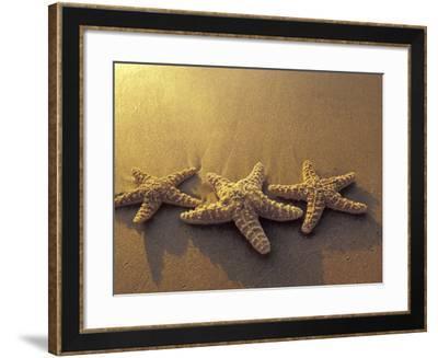 Starfish and Sand at Sunset, Maui, Hawaii, USA-Darrell Gulin-Framed Photographic Print