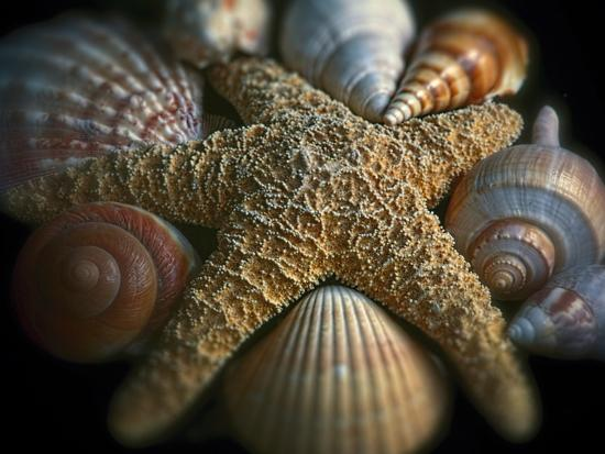 Starfish and Sea Shells-George Oze-Photographic Print