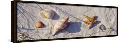 Starfish and Seashells on the Beach, Dauphin Island, Alabama, USA
