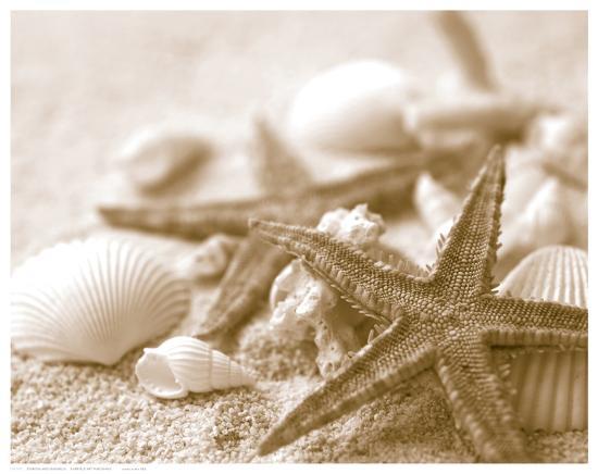 Starfish and Seashells--Art Print