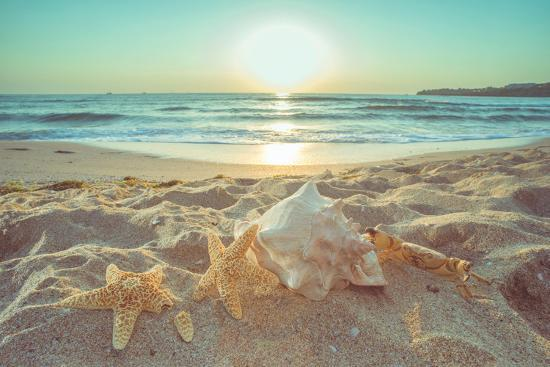 Starfish and Shells on the Beach at Sunrise-Deyan Georgiev-Photographic Print