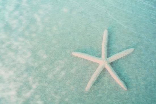 Starfish II-Roberta Murray-Art Print