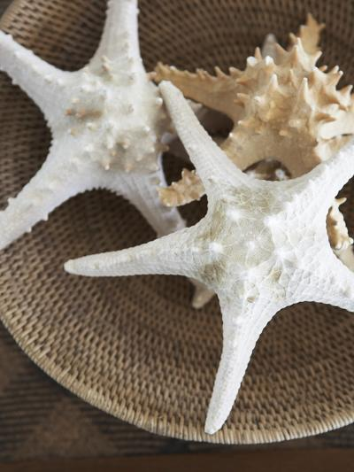 Starfish in a basket-Felix Wirth-Photographic Print
