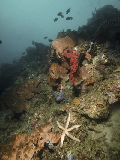 Starfish in a Diverse Reef, Lembeh Strait, Indonesia-Stocktrek Images-Photographic Print