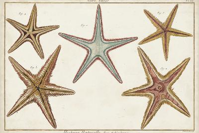 Starfish Naturelle I-Denis Diderot-Art Print