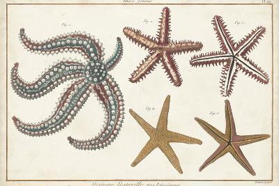 Starfish Naturelle II-Denis Diderot-Art Print