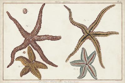 Starfish Naturelle III-Denis Diderot-Art Print