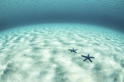 Starfish on a Brightly Lit Seafloor in the Tropical Pacific Ocean-Stocktrek Images-Photographic Print