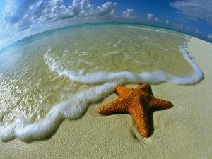 Starfish on Edge of Shore