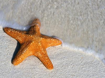 Starfish on Shore--Photographic Print
