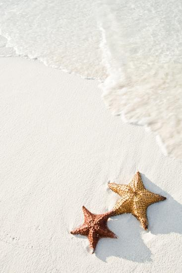 Starfish on Tropical Beach-Mehmed Zelkovic-Photographic Print