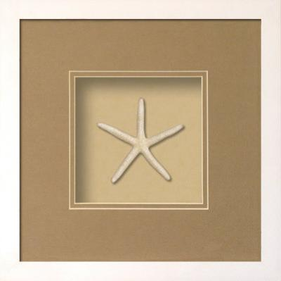 Starfish Shadowbox - Sand