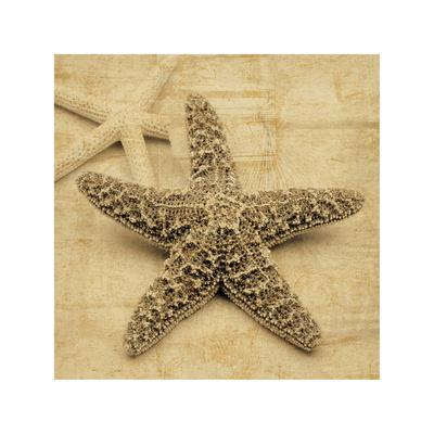 https://imgc.artprintimages.com/img/print/starfish_u-l-f7m7bp0.jpg?p=0