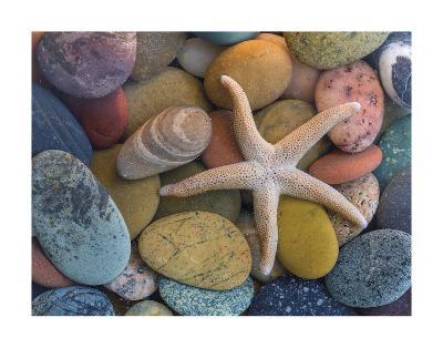 Starfish-Don Paulson-Giclee Print