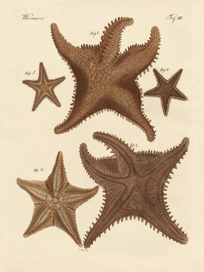 Starfish--Giclee Print