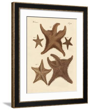Starfish--Framed Giclee Print
