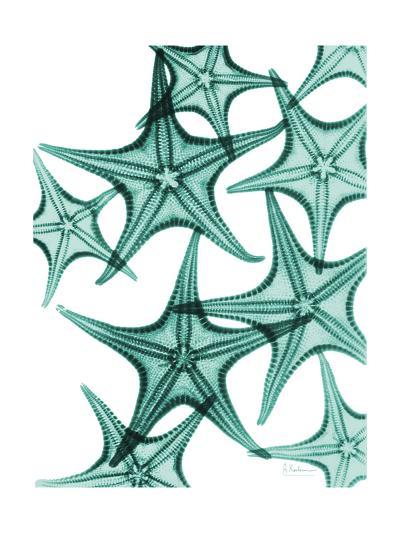 Starfish-Albert Koetsier-Premium Giclee Print
