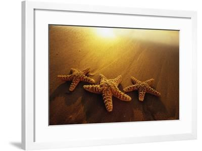 Starfishes on Maui Beach-Darrell Gulin-Framed Photographic Print