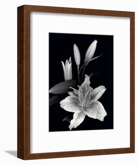 Stargazer Lily Study-Anna Miller-Framed Photographic Print