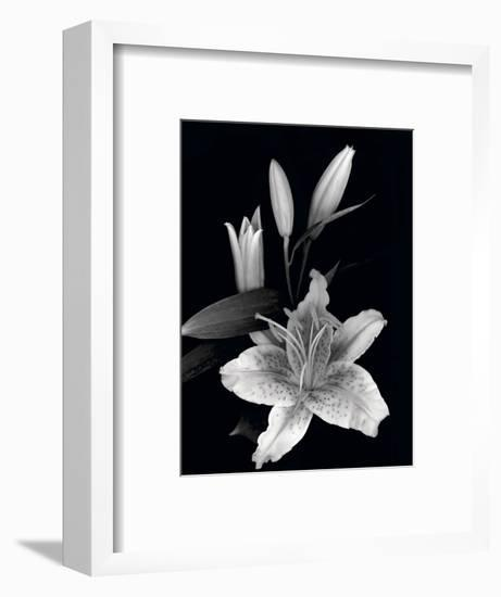 Stargazer Lily Study-Anna Miller-Framed Photographic Print