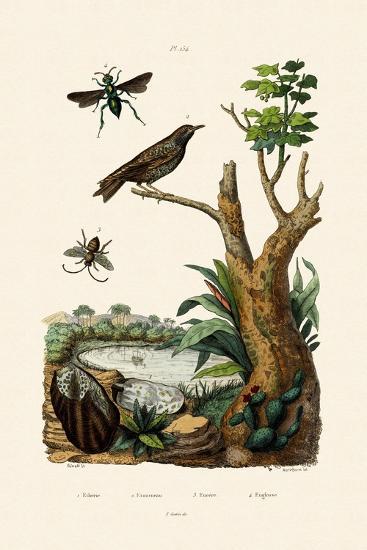 Starling, 1833-39--Giclee Print