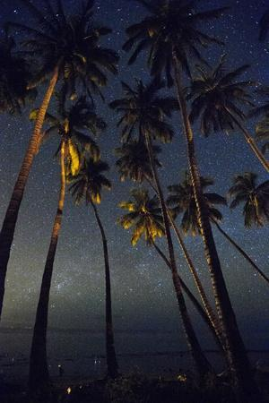 https://imgc.artprintimages.com/img/print/starry-night-in-the-kapuaiwa-coconut-grove-molokai_u-l-pwdr130.jpg?p=0