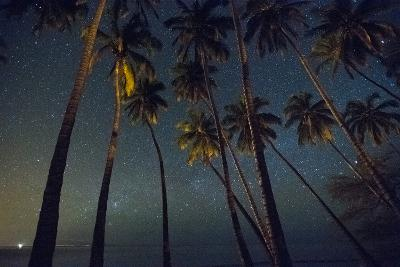 Starry Night in the Kapuaiwa Coconut Grove-Jonathan Kingston-Photographic Print