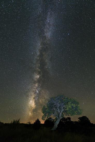 Stars over Pinon-Michael Blanchette Photography-Photographic Print