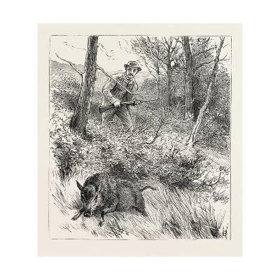 Starts a Pig While Looking for Woodcock, 1884--Giclee Print