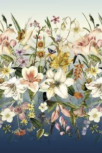 Orchids in Bloom by Stefan Jans