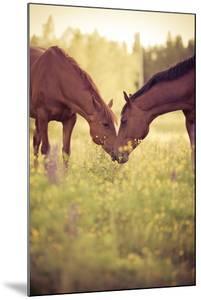 Two Horses in Field by Stefan Sager