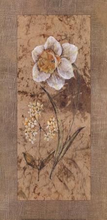 Antique Daffodil
