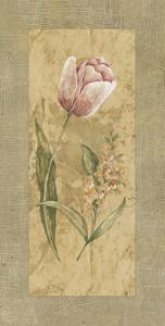 Antique Tulip by Stefania Carlini