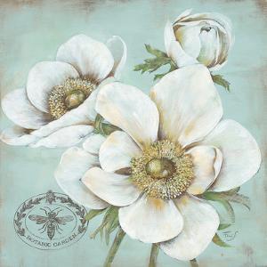 Anemone Stamp by Stefania Ferri
