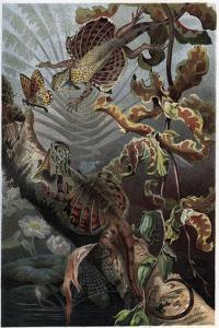 Draco by Alfred Edmund Brehm by Stefano Bianchetti