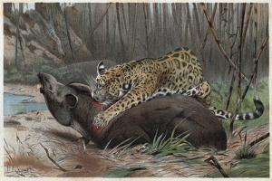Jaguar by Alfred Edmund Brehm by Stefano Bianchetti