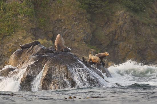 Stellar Sea Lions and Crashing Waves at Flattery Rocks on the Olympic Coast-Gary Luhm-Photographic Print