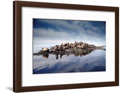 Steller's Sea Lion group hauled out on coastal rocks, Brothers Island, Alaska-Tim Fitzharris-Framed Art Print