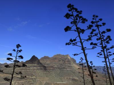 Stems of Agave Plants with Talayon De La Cogolla Mountain Beyond-Ruth Eastham & Max Paoli-Photographic Print