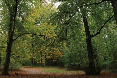 Woods Wanderer 1