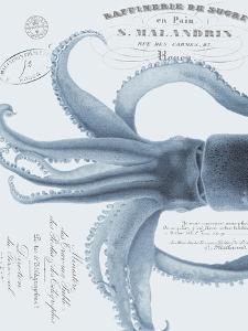 Sea Creatures - Almalfi by Stephanie Monahan