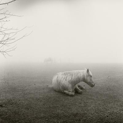 A Horse Resting in Heavy Fog by Stephen Alvarez