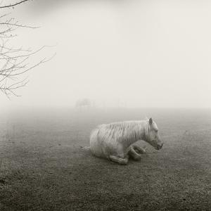 A Horse Resting in Heavy Fog by Stephen Alvarez