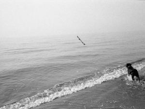 Dog Fetches a Stick at the Shore by Stephen Alvarez