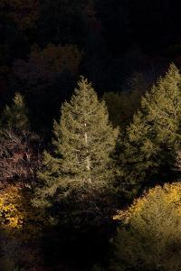 Evergreen and Other Trees Illuminated at Night by Stephen Alvarez