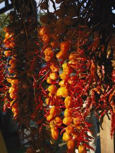 Organically-Grown Peppers are Hung at the Cary Farmers Market by Stephen Alvarez