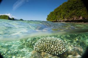 The Sea Floor of Palau's Rock Islands by Stephen Alvarez