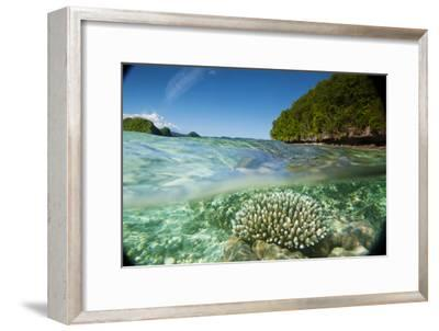 The Sea Floor of Palau's Rock Islands