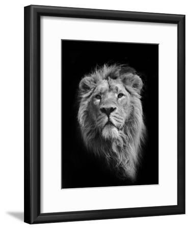 The King (Asiatic Lion)