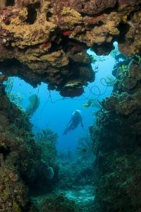 Diver Seen through Opening in Coral Reef. by Stephen Frink
